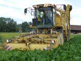 ROPA Eurotiger combină de recoltat sfeclă