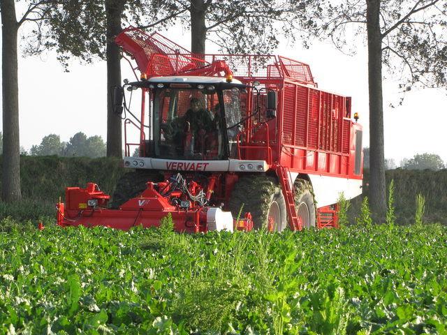 VERVAET 625 combină de recoltat sfeclă nou